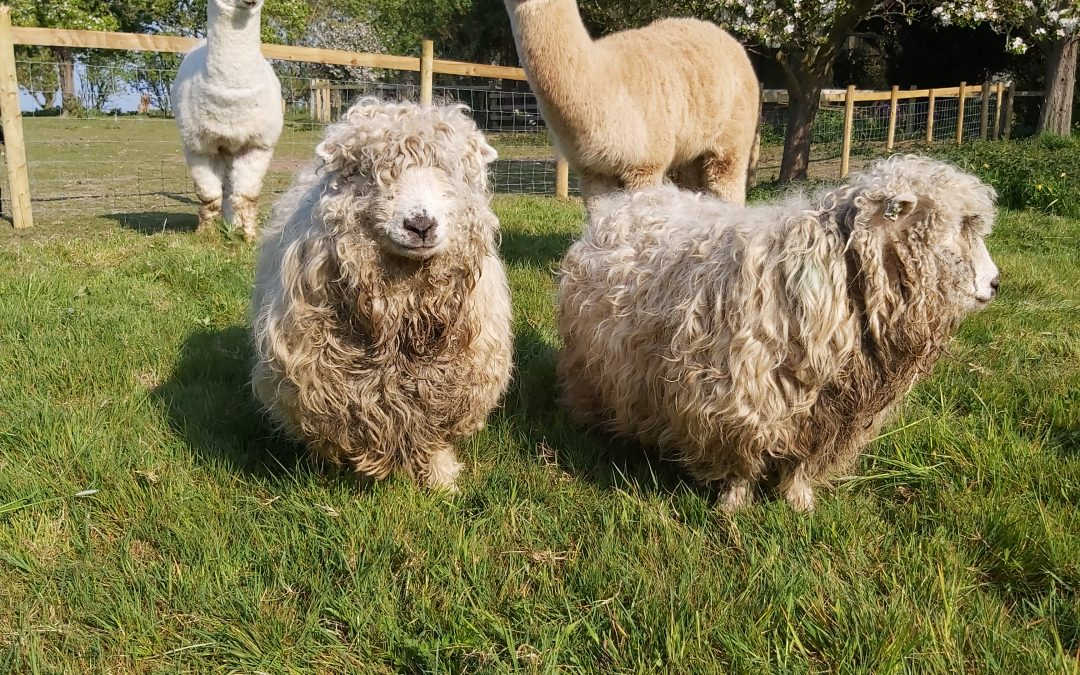 15th & 16th May Weekend Open Farm